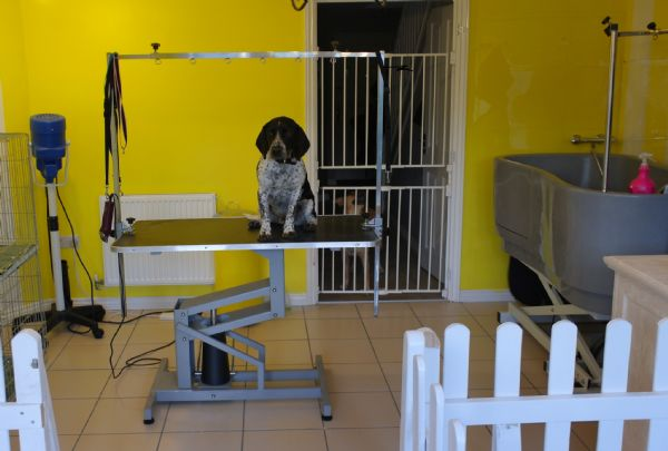 Tidy Tails Dog Grooming